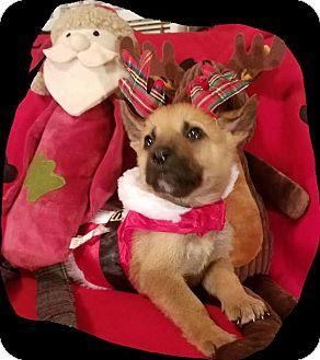 German Shepherd Dog/Retriever (Unknown Type) Mix Puppy for adoption in Detroit, Michigan - Pepperminstix