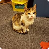 Adopt A Pet :: Reno - Rochester, MN