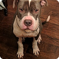 Adopt A Pet :: Duckie (COURTESY POST) - Baltimore, MD