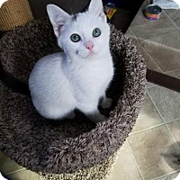 Adopt A Pet :: Jagger - Seaford, DE