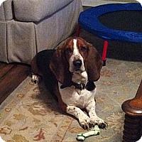 Adopt A Pet :: McCoy - Northport, AL