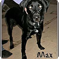 Adopt A Pet :: Max - Silsbee, TX