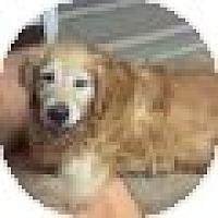 Adopt A Pet :: Boy - Denver, CO