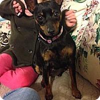 Adopt A Pet :: Katie - Tumwater, WA