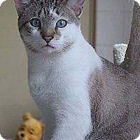Adopt A Pet :: Sky (Westhampton) - New York, NY