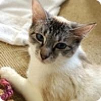 Adopt A Pet :: Clove - Vancouver, BC