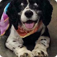 Adopt A Pet :: Benny-ADOPTED!! - Sacramento, CA