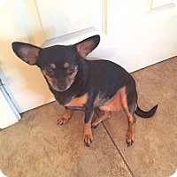 Adopt A Pet :: Rosie - Scottsdale, AZ