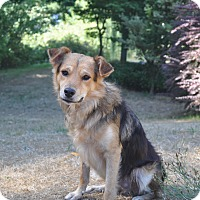 Adopt A Pet :: Daddy - Tumwater, WA
