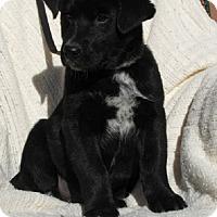 Adopt A Pet :: Jonah - Oakland, AR