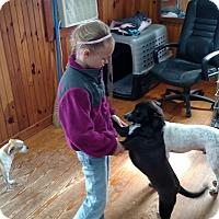 Adopt A Pet :: Stanley - Lebanon, CT