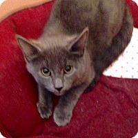 Adopt A Pet :: Shroeder - Colmar, PA