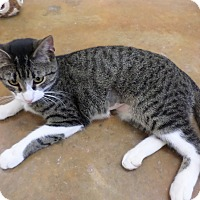 Adopt A Pet :: BeBe - Lake Charles, LA