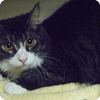 Adopt A Pet :: Dion - Hamburg, NY