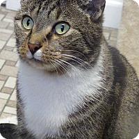 Adopt A Pet :: Minnie - Queenstown, MD