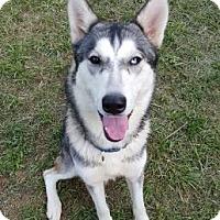 Adopt A Pet :: Malena - Clay, AL