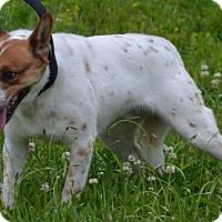 Adopt A Pet :: Milo - Lebanon, MO