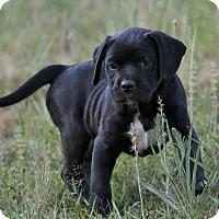 Adopt A Pet :: Doni - Good Hope, GA