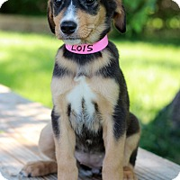 Adopt A Pet :: Lois - Waldorf, MD