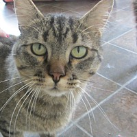 Adopt A Pet :: Newby - Ridgway, CO