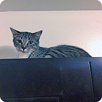 Adopt A Pet :: Mist - Mississauga, Ontario, ON