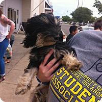 Adopt A Pet :: Patrick - Blanchard, OK