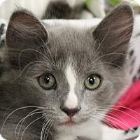 Adopt A Pet :: Sedona - Sarasota, FL