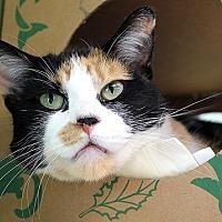 Adopt A Pet :: Brindisi - Chicago, IL