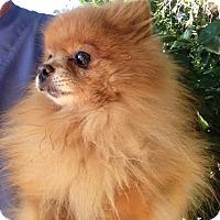 Adopt A Pet :: Starbuck - Temecula, CA