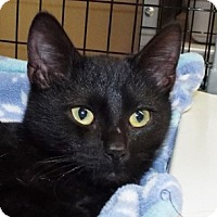 Adopt A Pet :: Gus - Grants Pass, OR