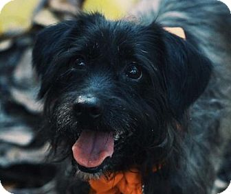 Terrier (Unknown Type, Medium) Mix Dog for adoption in Fort Lauderdale, Florida - Lily
