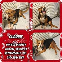 Adopt A Pet :: CLARISE - Kenansville, NC