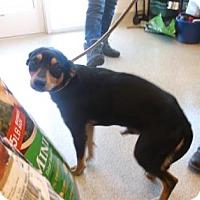 Adopt A Pet :: BO - Gloucester, VA