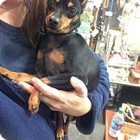 Adopt A Pet :: Tilley - Russellville, KY