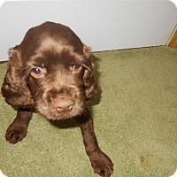 Adopt A Pet :: Chip - Kannapolis, NC