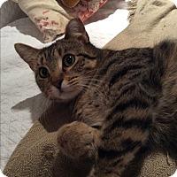Adopt A Pet :: Dina - Beaufort, SC