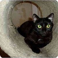 Adopt A Pet :: Lil' Missy - Little Rock, AR