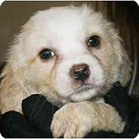 Adopt A Pet :: Snuggles - Staunton, VA