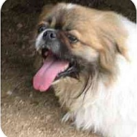 Adopt A Pet :: J.J. - Golden Valley, AZ