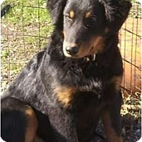 Adopt A Pet :: Happy - Glenpool, OK
