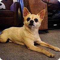 Adopt A Pet :: Koa - Gig Harbor, WA