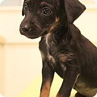 Adopt A Pet :: Cruz - Bedminster, NJ
