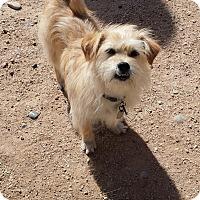 Adopt A Pet :: Fay Raye - Scottsdale, AZ