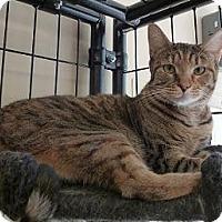 Adopt A Pet :: Brianna - Massapequa, NY
