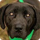 Adopt A Pet :: Brok