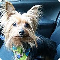 Adopt A Pet :: Harrison - Chicago, IL