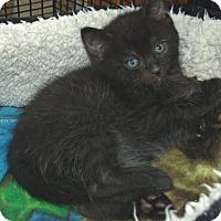 Adopt A Pet :: MARIO - Acme, PA