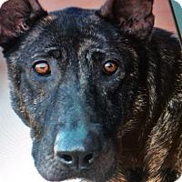 Adopt A Pet :: BALLERINA VON BREY - Los Angeles, CA