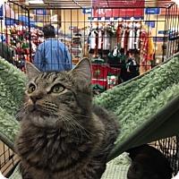 Adopt A Pet :: Tenille - McDonough, GA