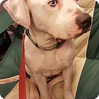 Adopt A Pet :: Gunther - Elyria, OH